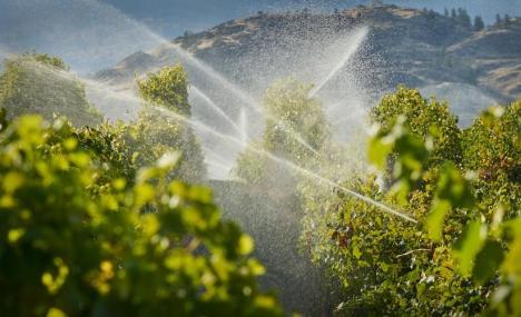 Un modello semplice ma potente per predire il consumo di acqua per l'irrigazione